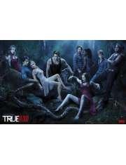 Czysta krew - True Blood - plakat